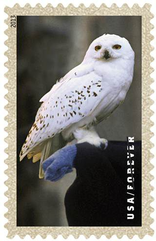 hedwig stamp