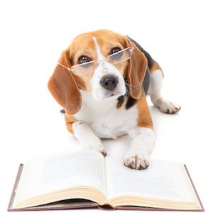 My journey to black belt: Does reading about martial arts ... |Puppy Reading