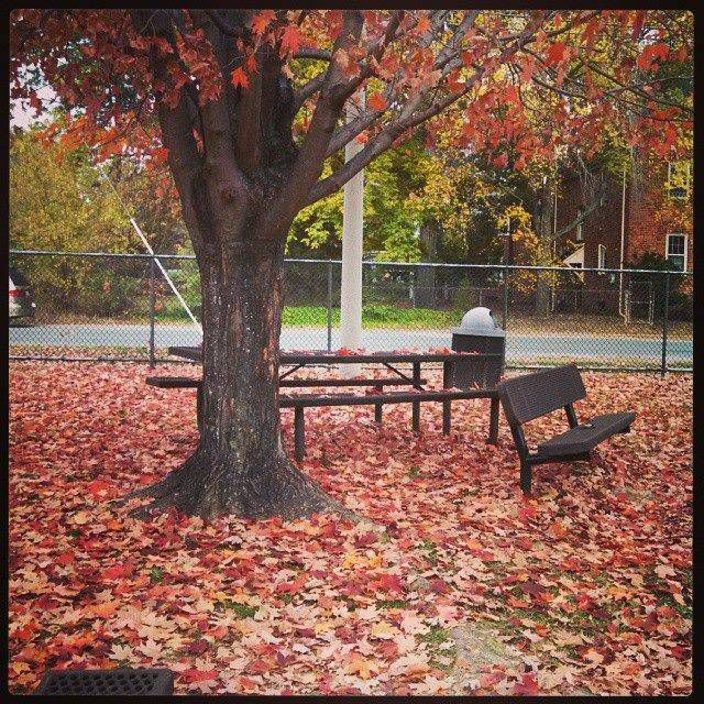 Here's the park where I started GILEAD (with breaks to stomp in the leaves!)