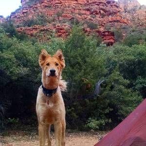 backpacking doge