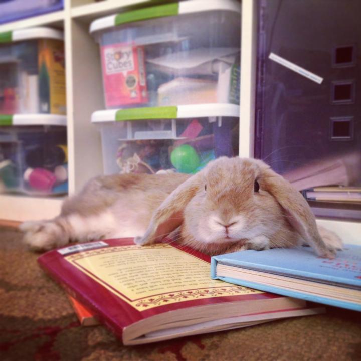 karina bunny photo