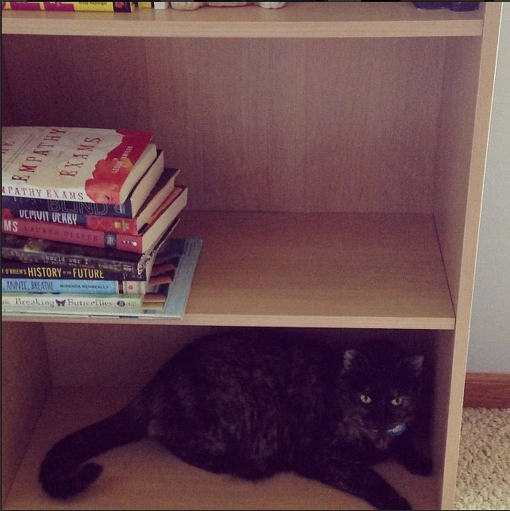 kelly cat j bookshelf