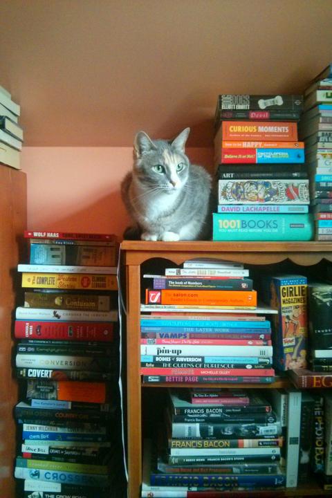 liberty millay cat photo