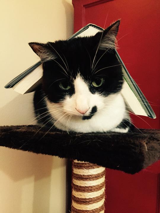 maddie cat 2