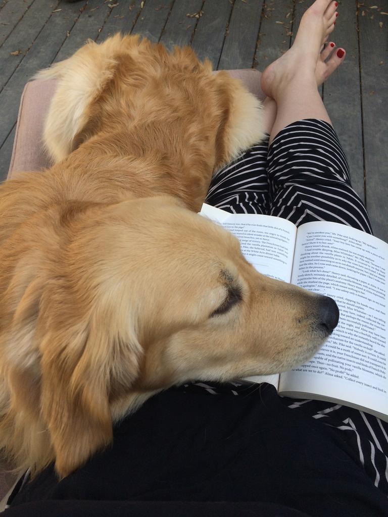 rachel manwill dog book