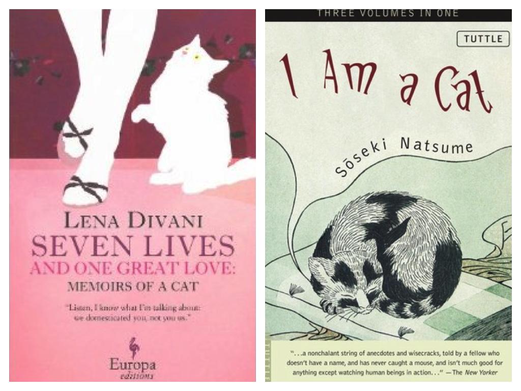 seven lives and i am a cat