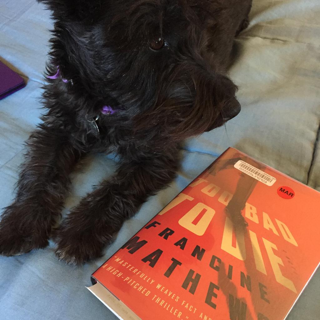 tasha books dog