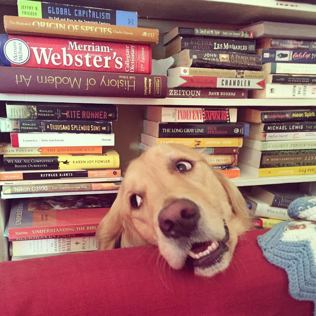 valerie dog books