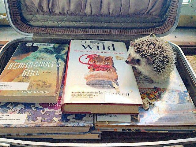 Ernest Hedgingway doesn't know how he's ever going to choose which books to leave behind when he leaves for vacation.