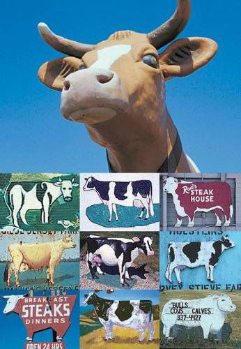 cows wanderlust USA image