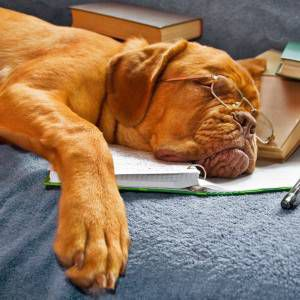 The Literate Dogs of Instagram | BOOK RIOT