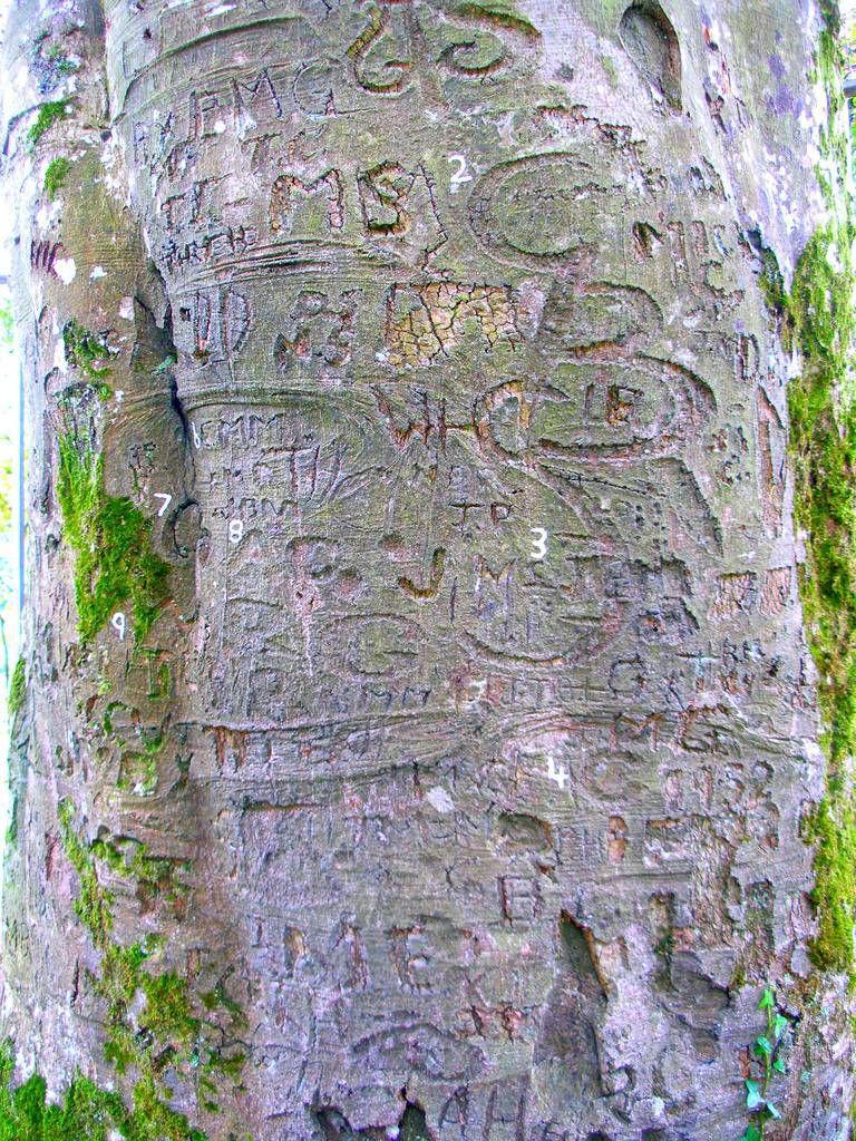 coole park autograph tree