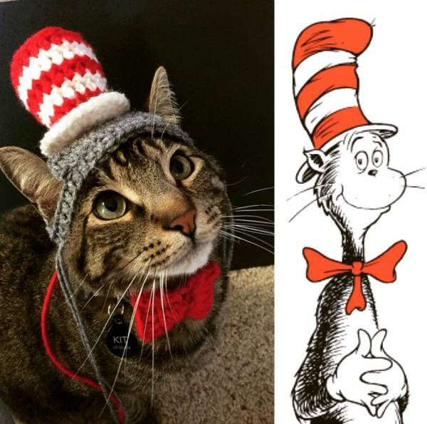 A cat dressed in a pet costume asDr. Seuss's famous Cat in the Cat.