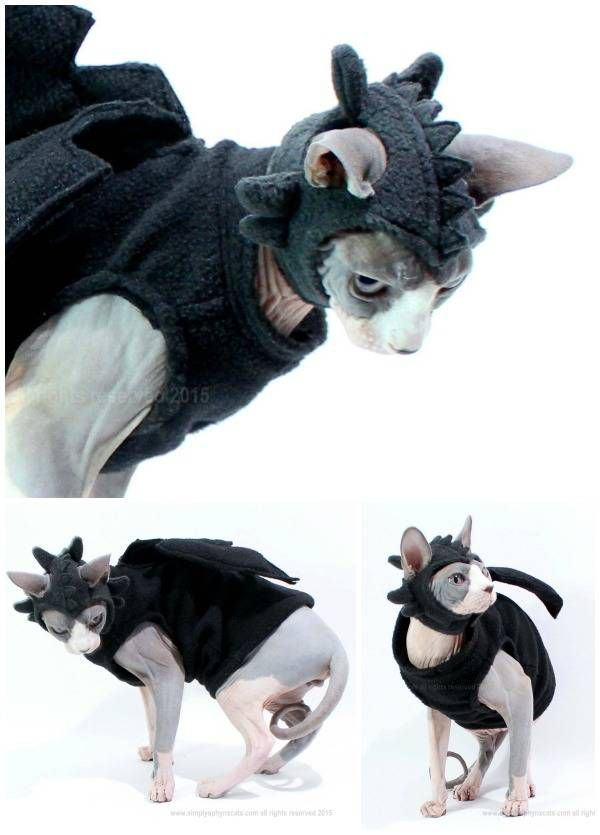 A dragon costume for a cat - perfect for Game of Thrones fans.