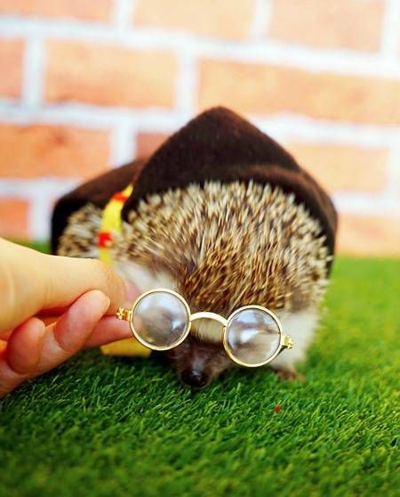 Bookish pet costumes - this tiny Harry Potter costume is made especially for hedgehogs who want to dress as JK Rowling's Boy Who Lived.