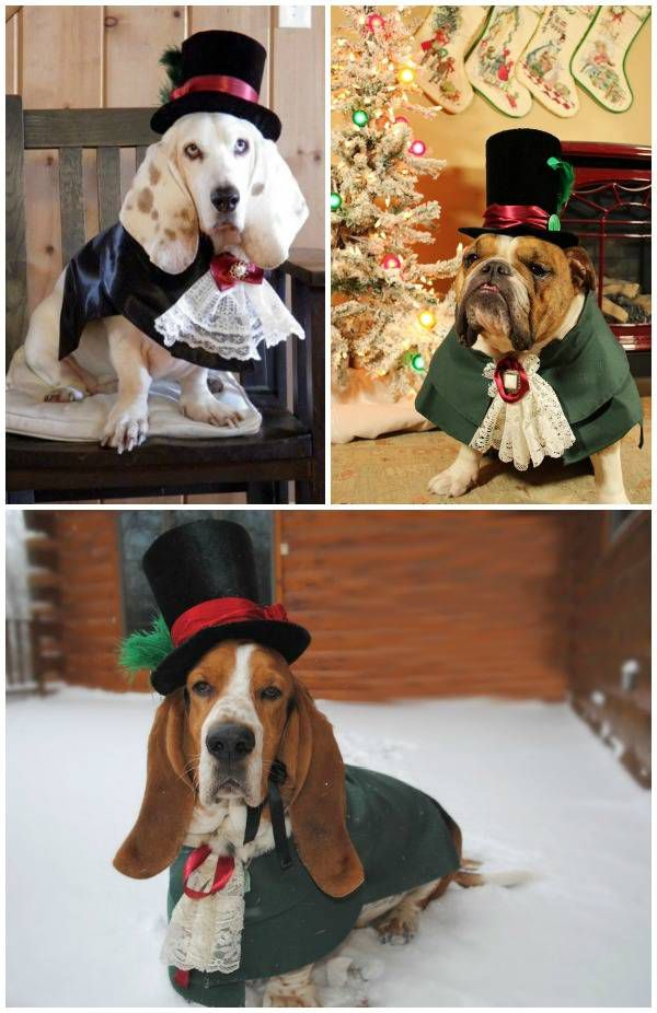 Custom Victorian costumes for dogs - these amazing pet costumes are meant for canine ringbearers, but would be perfect for many occasions.