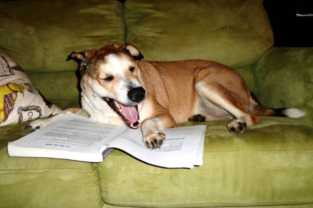 Dog laughing at a book