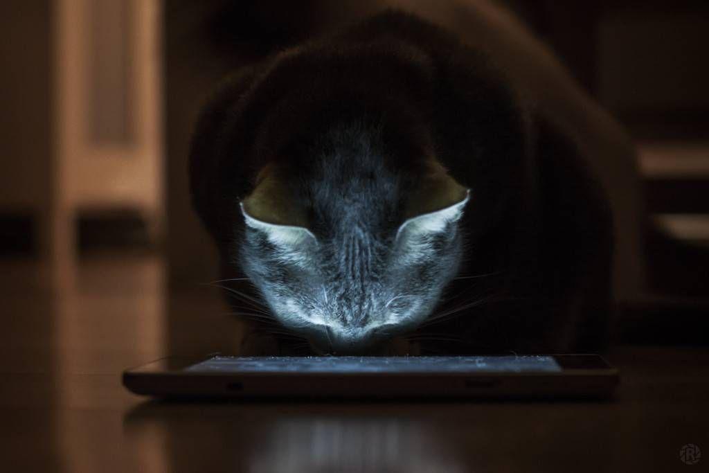 Cat viewing an e-reader