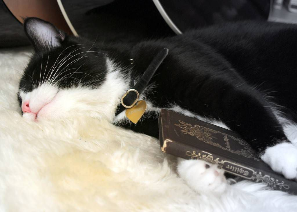Cat Asleep on a Copy of Schiller