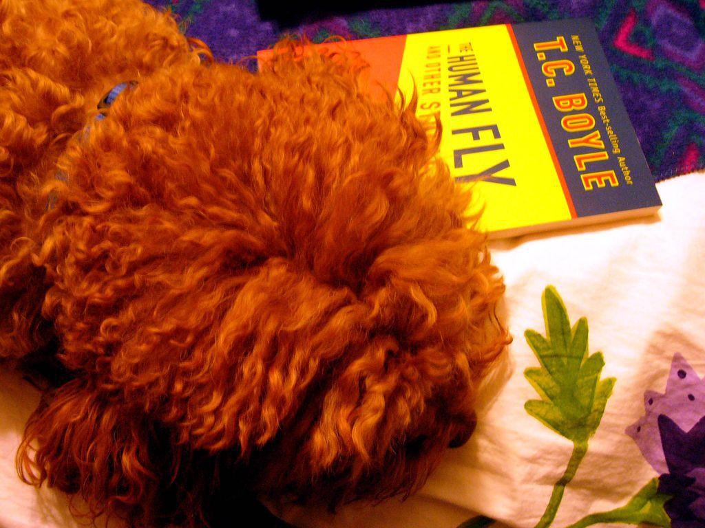 Dog asleep on his book