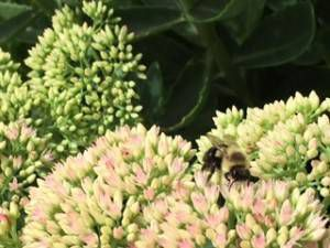bee in plant