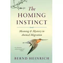 Homing Instinct by Heinrich