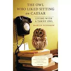 The Owl Who Liked Sitting by Martin Windrow