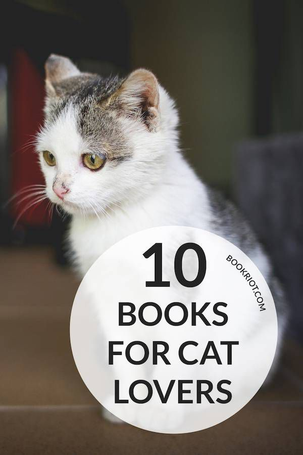 'How to Tell If Your Cat Is Plotting to Kill You' and more books for cat lovers!