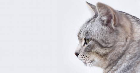 100 Must Read Books With Cats In Them