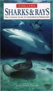 sharks and rays