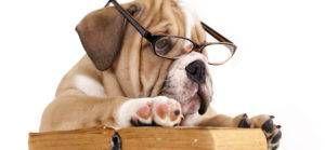 Best Literary Pet Names | BookRiot.com