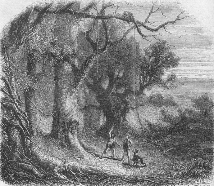 gold bug essays The fact that poe set his 1843 story 'the gold-bug'    on and around  this  essay explores the efforts of charleston and sullivan's island to write poe into  their.