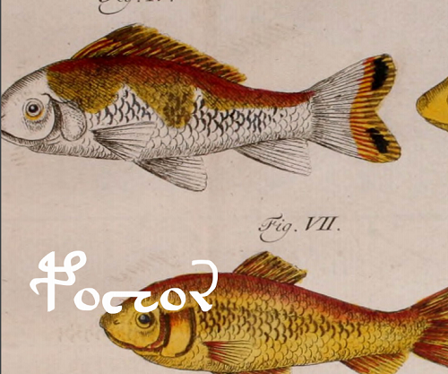 Image of fish from NaNoGenMo novel Seraphs