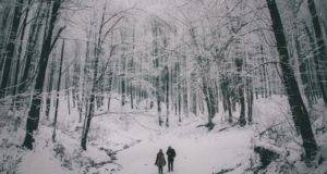 Snowy Forest from Wintry Reads to Cuddle Up With This December | bookriot.com