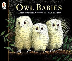 Owl Babies book cover