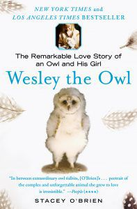 Wesley the Owl by Stacy O'Brien book cover