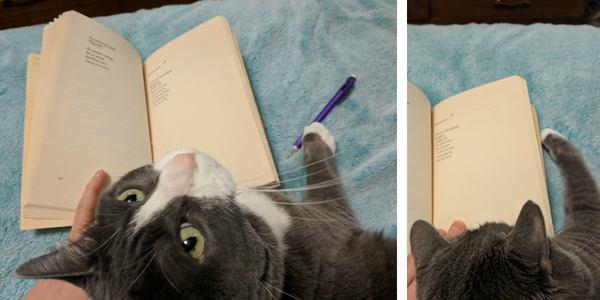 My cat reads and annotates Alice Walker poetry