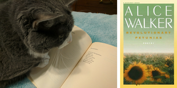 My cat reviews Revolutionary Petunias by Alice Walker