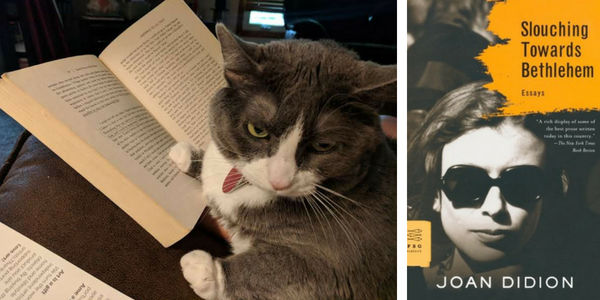 My cat reviews Slouching Towards Bethlehem by Joan Didion