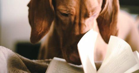 dog books feature
