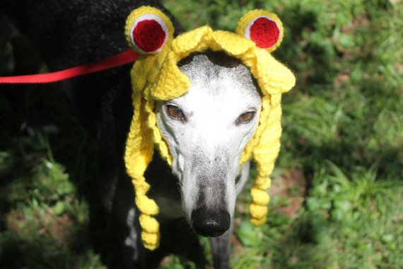 picture-pf-sailor-moon-dog-snood