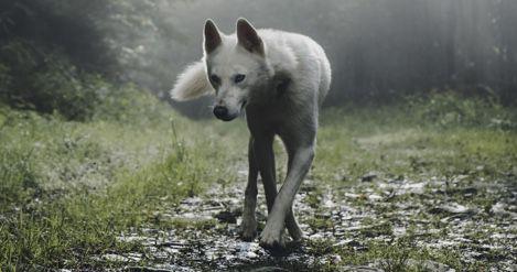 werewolf books from around the world