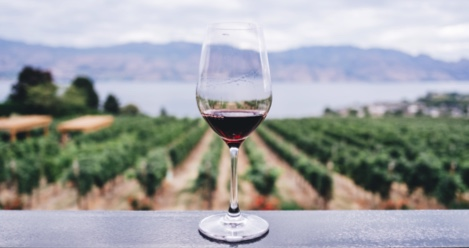 226484666a89 7 of the Best Books About Wine for New Connoisseurs