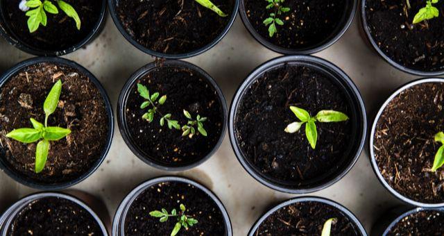 gardening feature 640x340