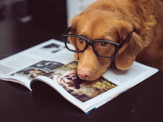 140 Literary Dog Names For The Very Best Bookish Dogs | Book