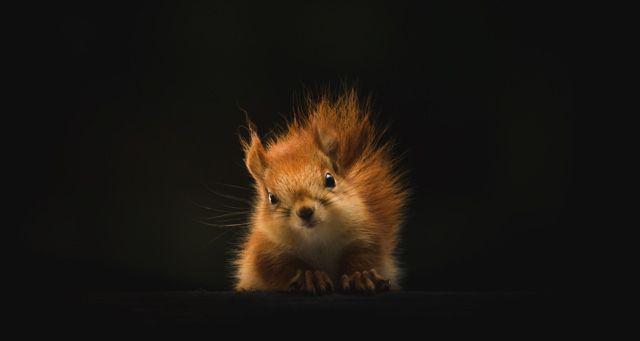 squirrel animals feature 640x340