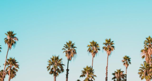 palm trees summer feature 640x340