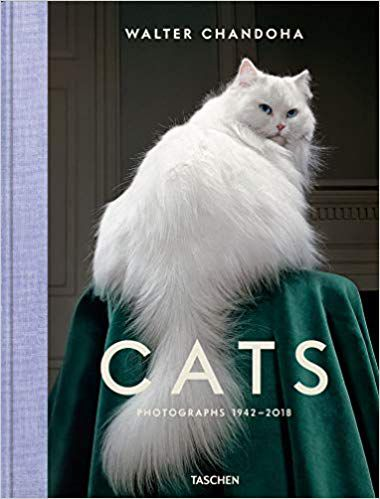 Cats book cover