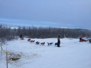 Dogsled team at Mile 101