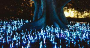 Phosphorescent mushrooms around tree